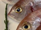 Alto nível de mercúrio é encontrado em peixes no Estado do Pará